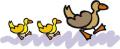 Ducks_blog-waddle_10-4-15